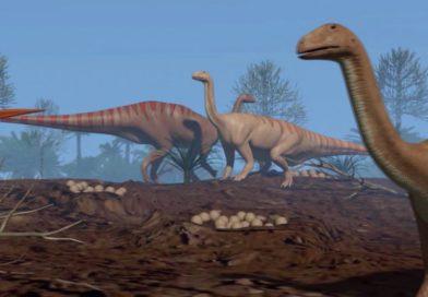 """""""Patagonia, tierra de dinosaurios"""": por qué la Argentina es uno de los lugares del planeta donde más fósiles se encuentran"""